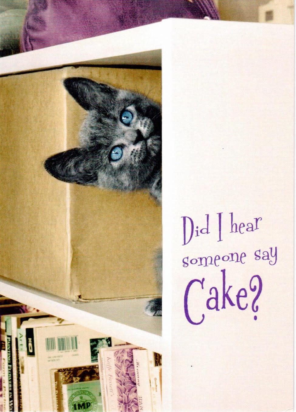 Did I Hear Someone Say Cake? - Kitten in Bookshelf
