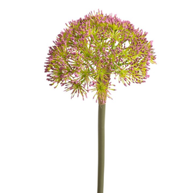 "Torre & Tagus Buddleia Bloom 26"" PInk S"