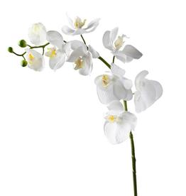 "Torre & Tagus Orchid Stem 30"""