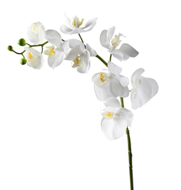"""Torre & Tagus Orchid Faux Single Stem 30"""" - White"""