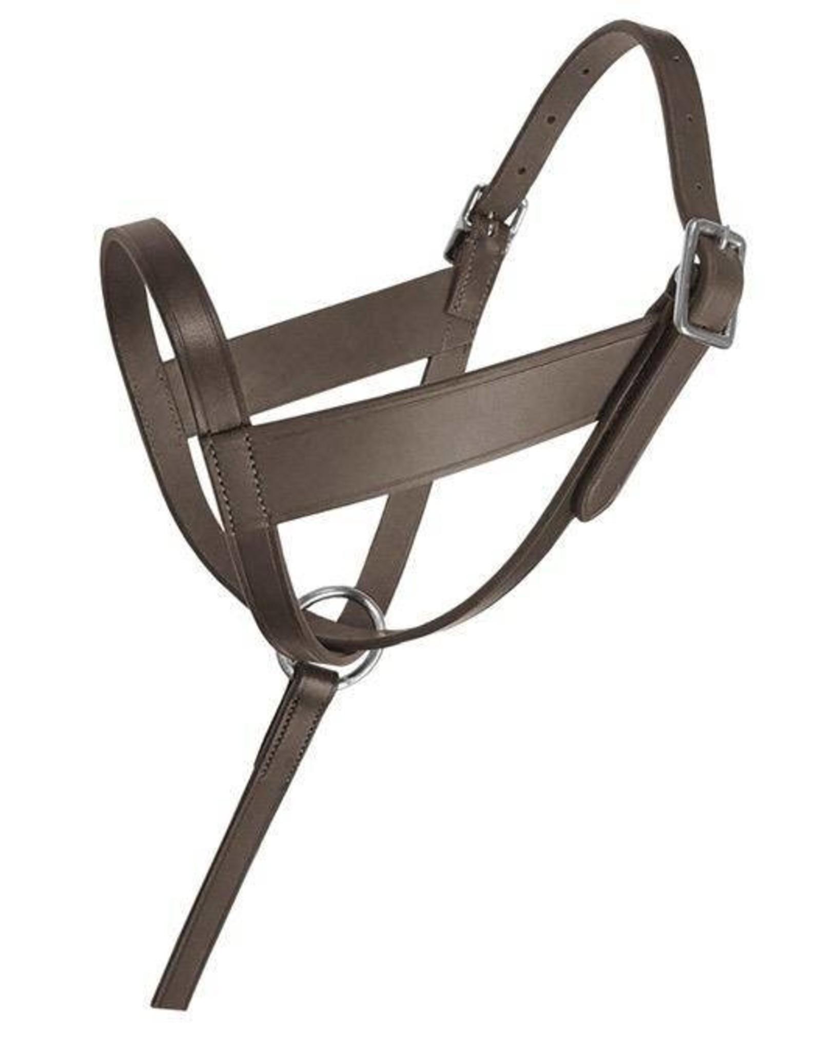 Lexington Leather Foal Halter