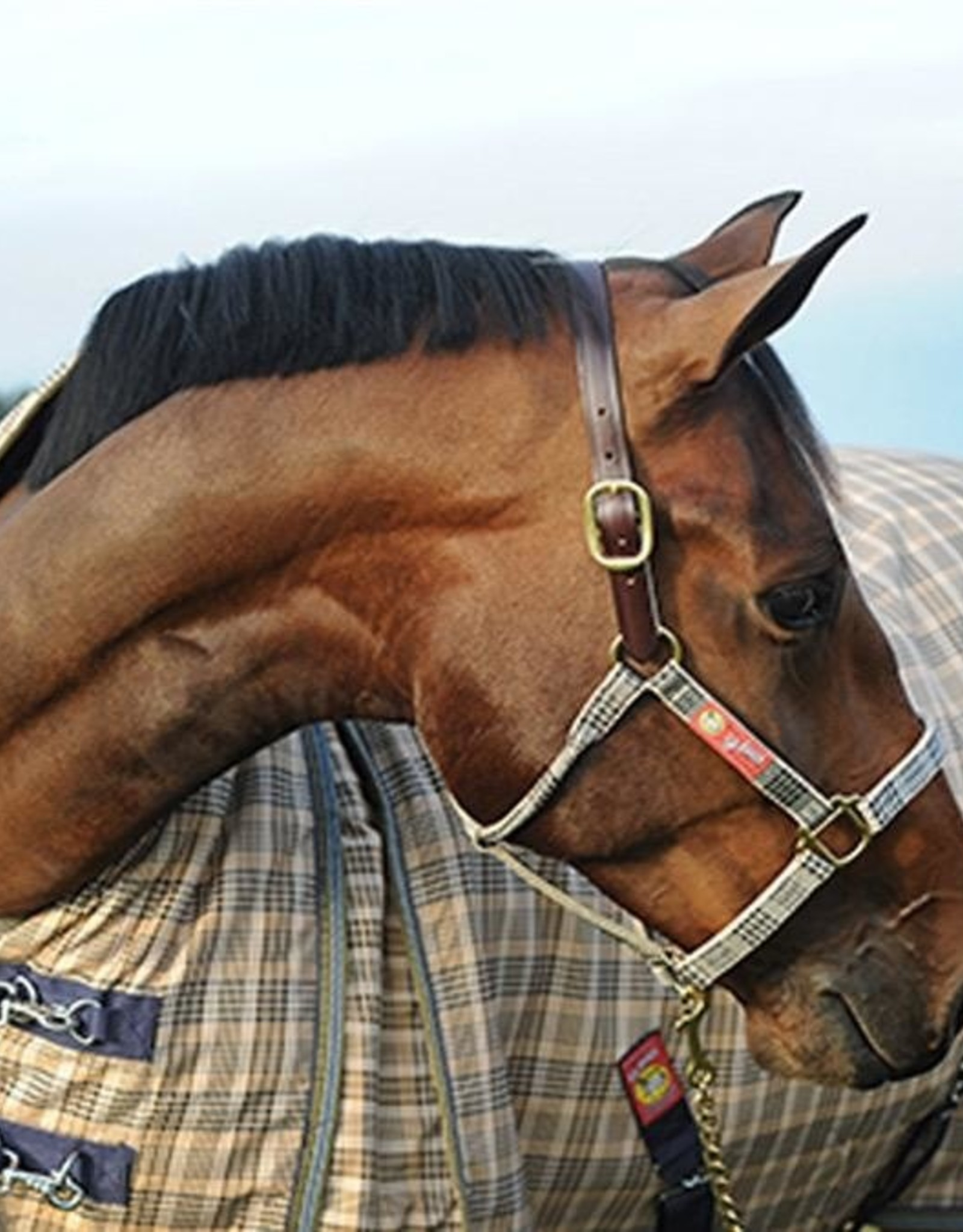 """5/A Baker Breakaway Halter with Full Leather Crown 1"""""""