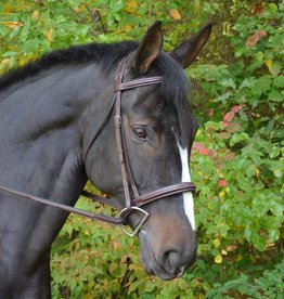 Black Oak Cypress Wide Nose Padded Bridle