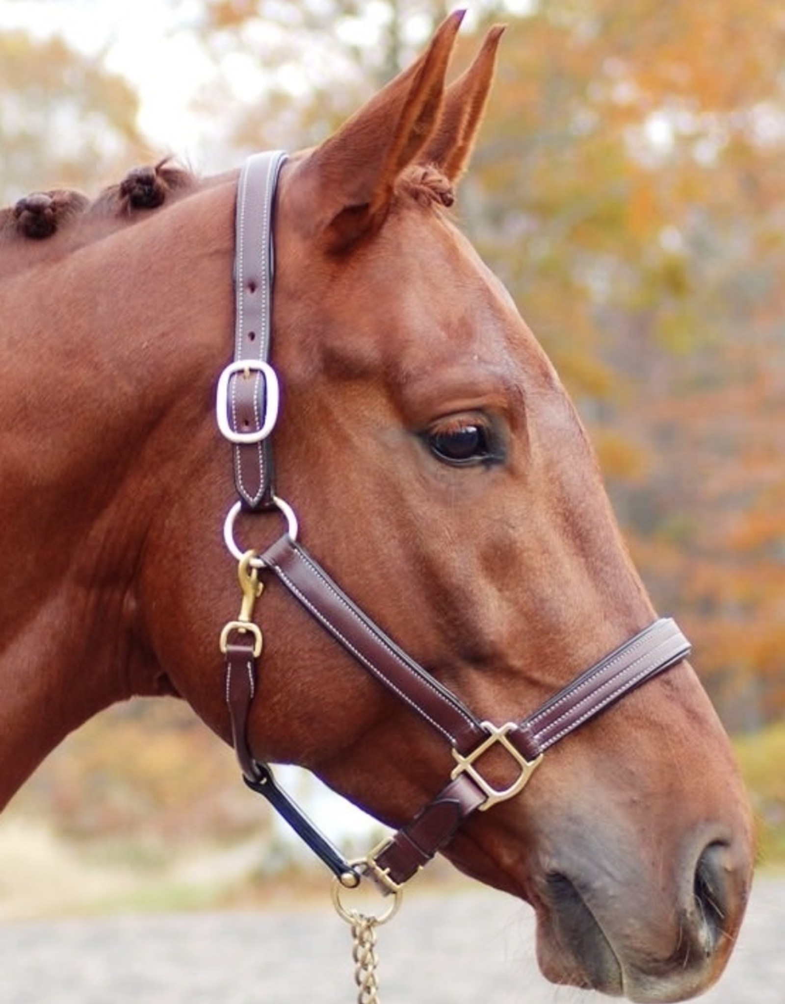 Red Barn Lainie Triple Stitched Padded Leather Halter