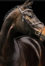 Schockemöhle Rio Select Figure-8 Headstall
