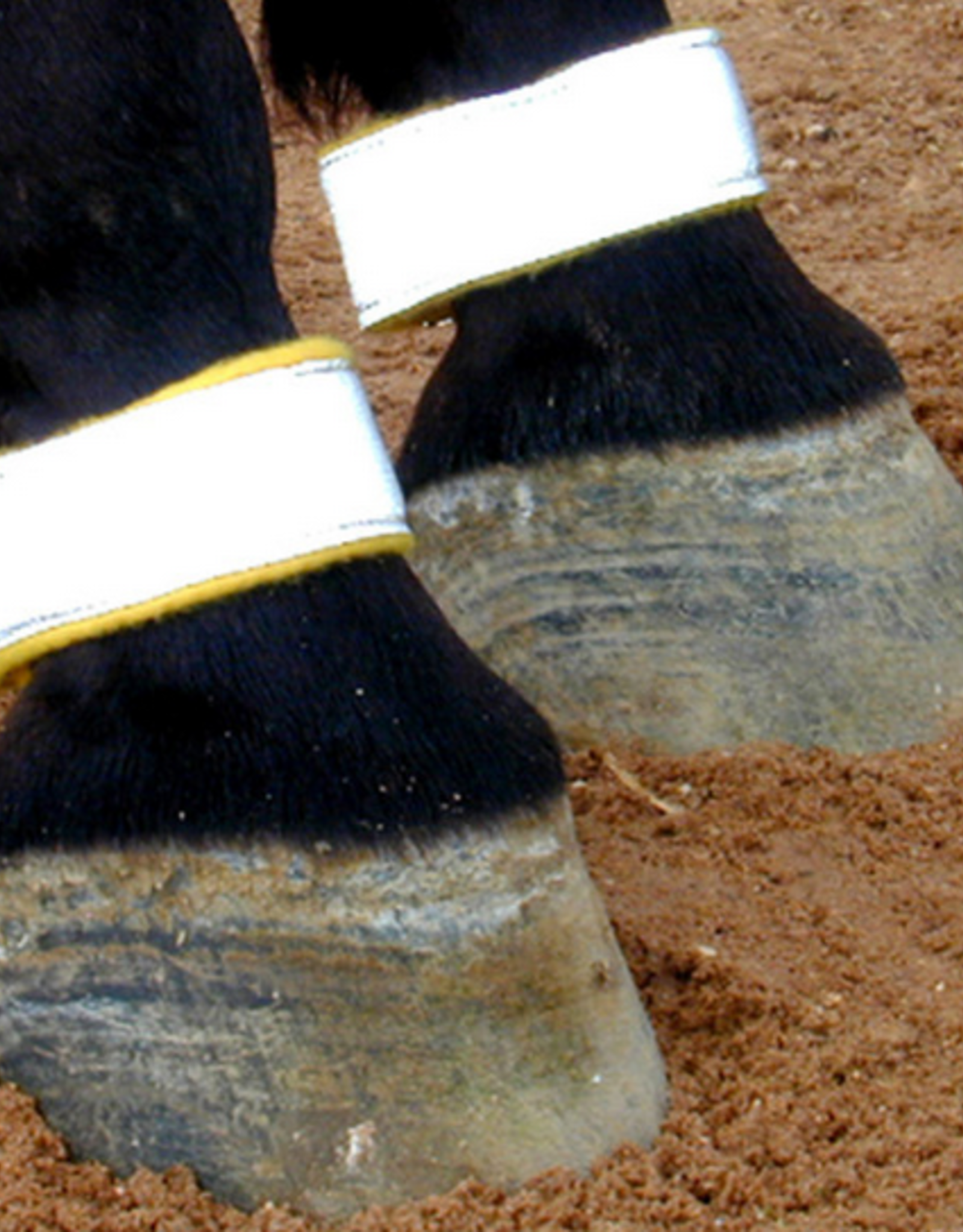 Reflective Pastern Bands - Pair
