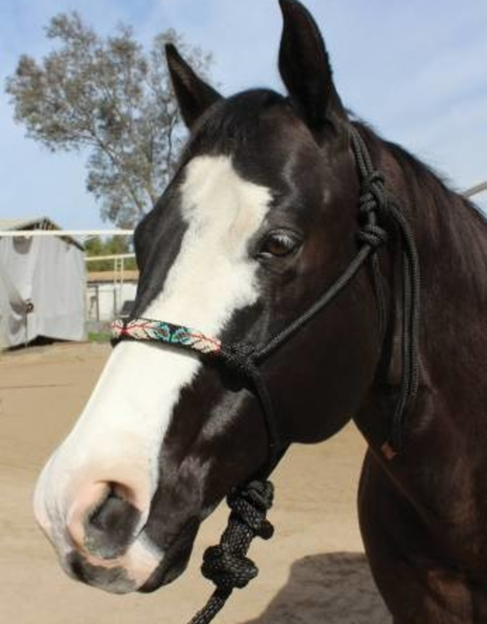 Professional's Choice Beaded Rope Halter with Lead