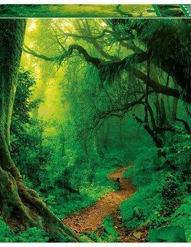 JOHN HANSEN COMPANY ED1000 ENCHANTED FOREST