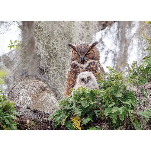 Cobble Hill CH1000 GREAT HORNED OWL