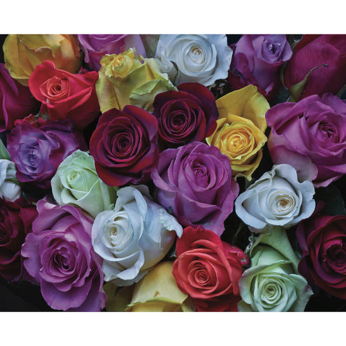 Hart Puzzles HA1000 PALETTE OF ROSES