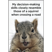 MAGNET DECISION SQUIRREL