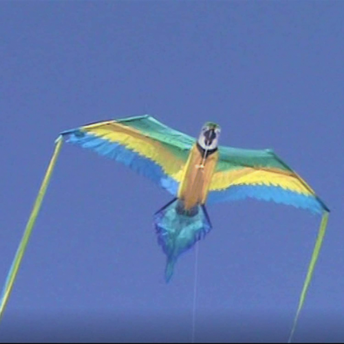 "WindNSun Kites KITE RAINFOREST MACAW 60"""