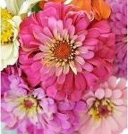 Pink Picasso Paint By Number, Zealous Zinnias
