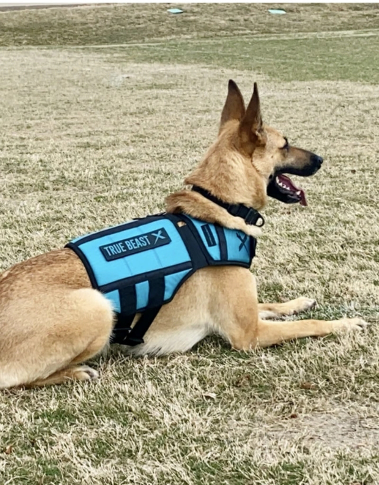 XDOG™ V3 XDOG Weight Vest for Dogs- Teal