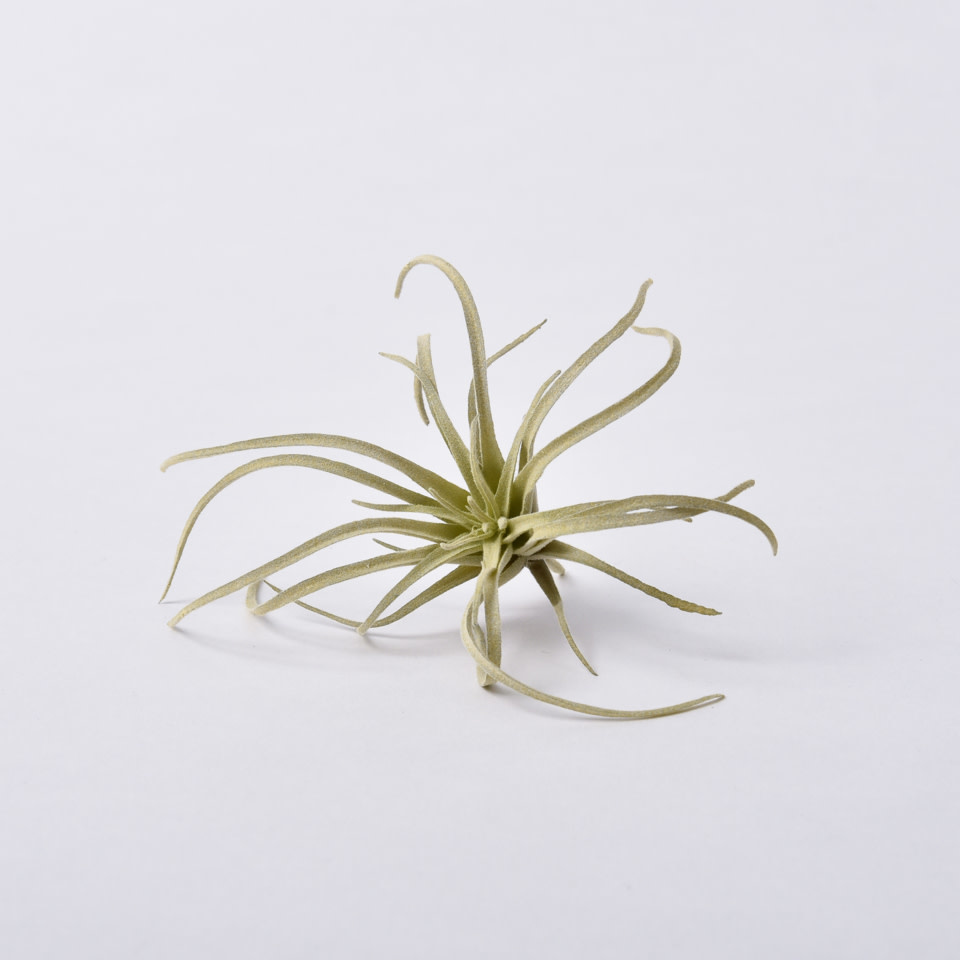 Light Green Tillandsia Pick- Small
