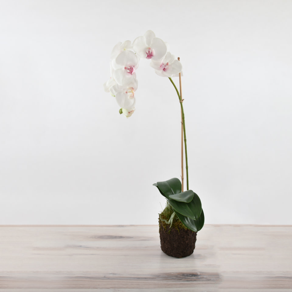 "26"" Phalaenopsis Drop In"