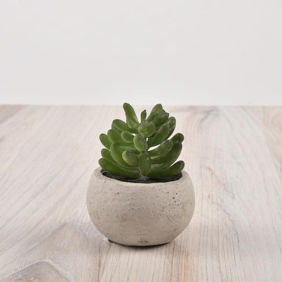 Mini Potted Succulent