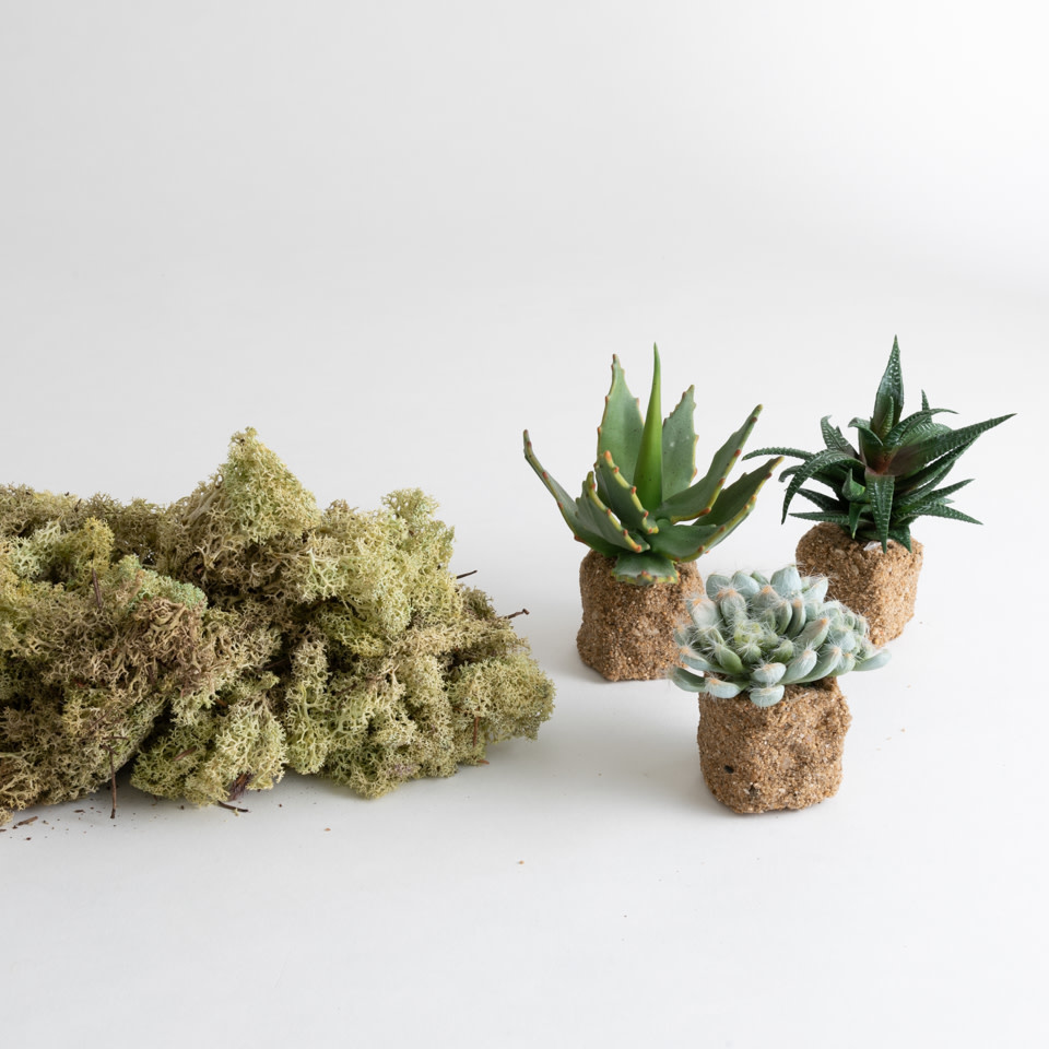 Natural Succulent Centerpiece Bundle