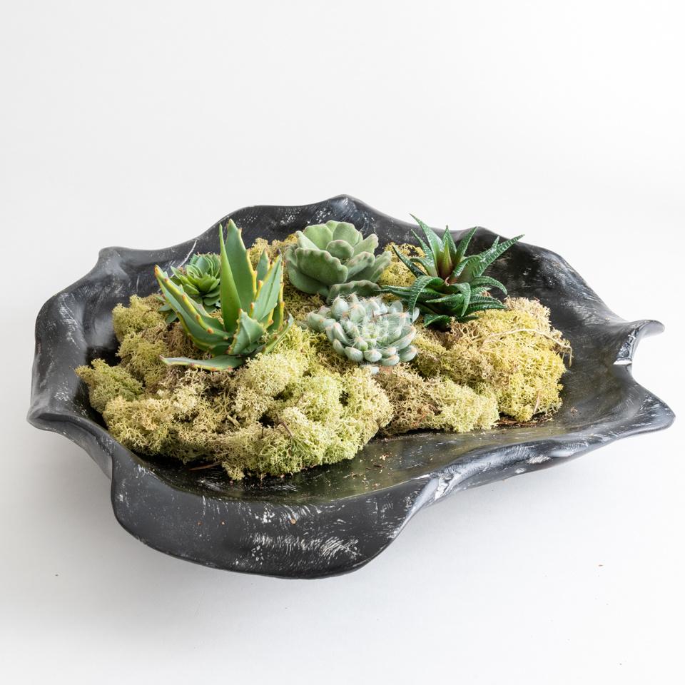 Black Succulent Centerpiece Bundle