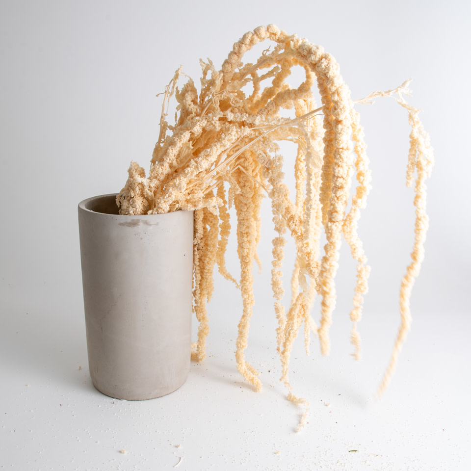 White Amaranthus Bundle
