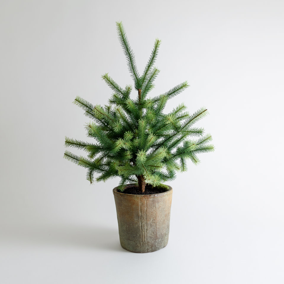 Potted Pine Tree 30""