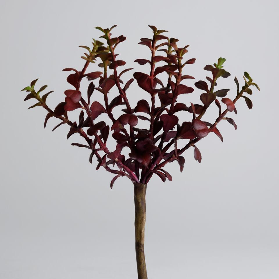 Jade Plant Pick