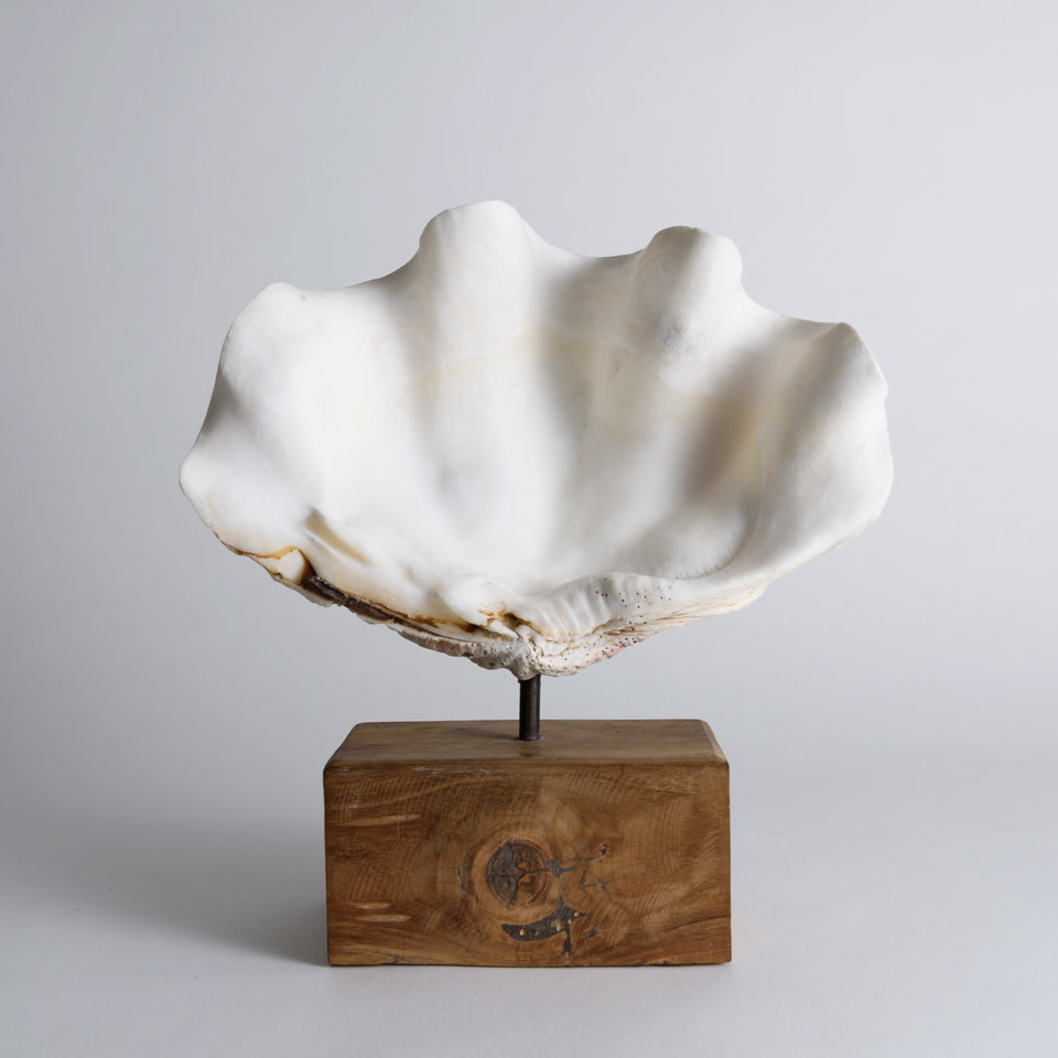 Shell on Stand