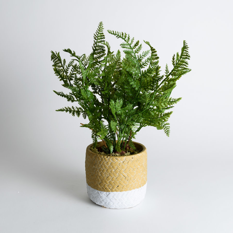 Soft Fern Drop-In 13""