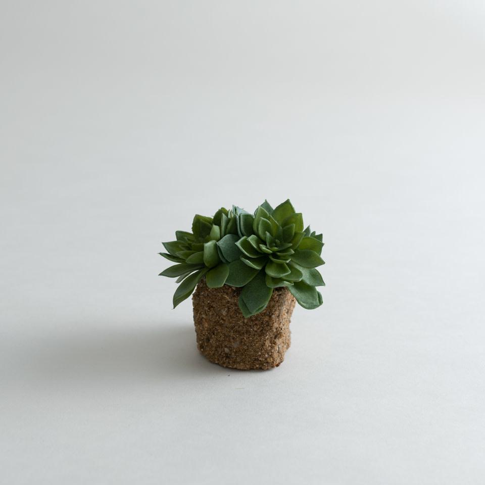 Succulent Drop-Ins