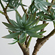 "19"" Jewel Succulent Drop-In"