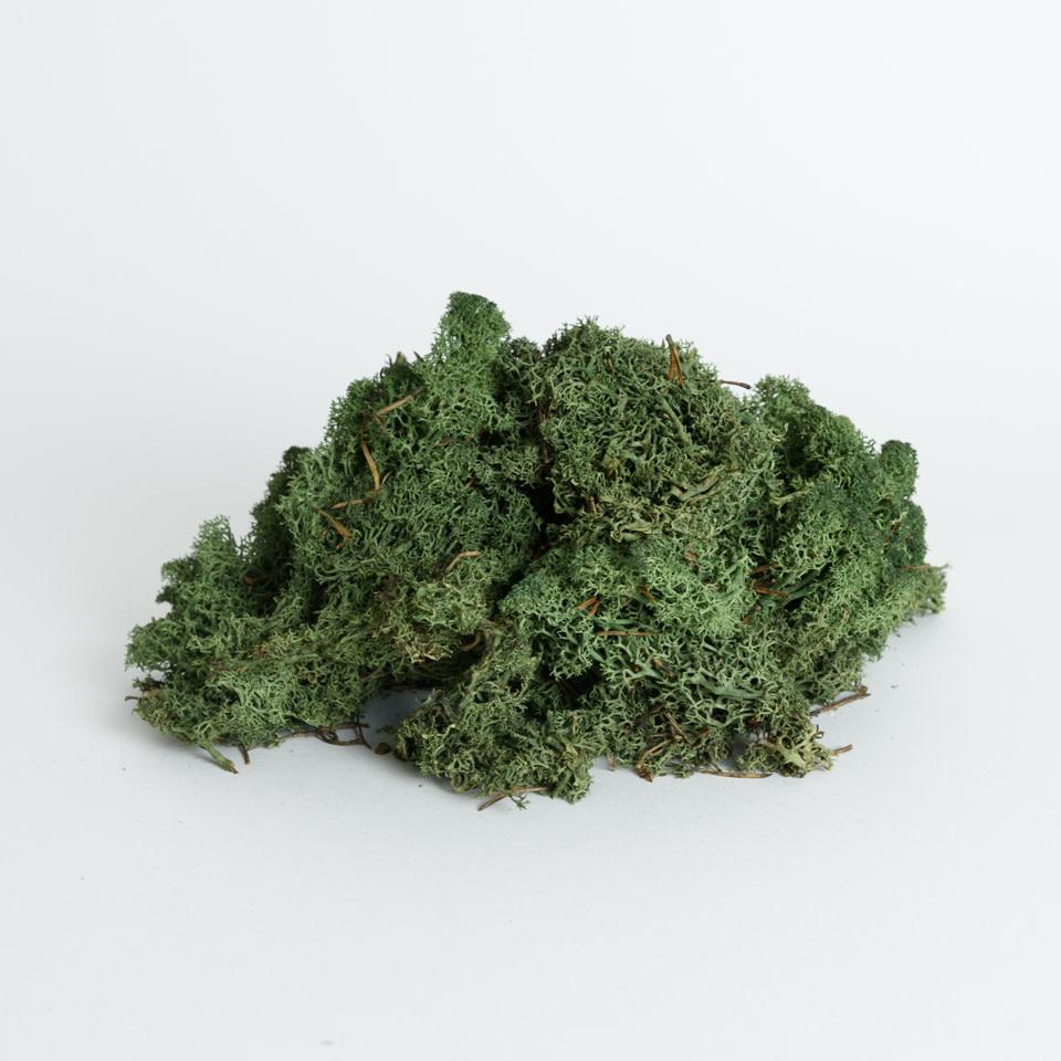 Grass Green Reindeer Moss