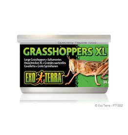 Exo Terra Canned Grasshoppers XL 34g