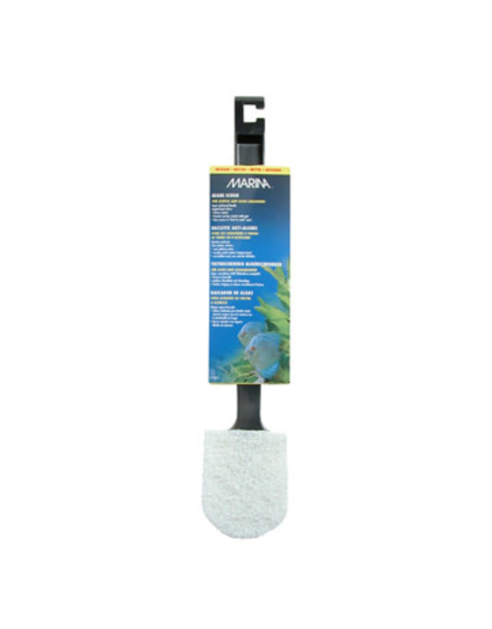 Marina Marina Medium Algae Scrubber with Plastic Handle