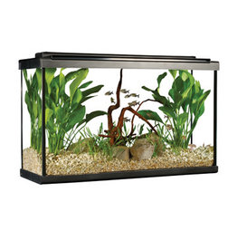 Fluval Fluval Premium Aquarium Kit with LED - 29 Tall - 110 L (29 US Gal)