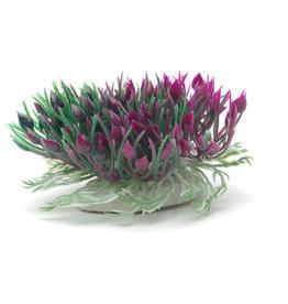 Marina Marina Betta Purple Hearts Shrub - 7.6 cm (3 in)