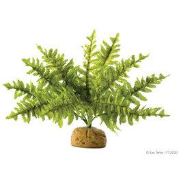 Exo Terra Rainforest Plant - Boston Fern - Small