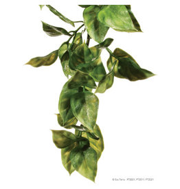 Exo Terra Jungle Plant Amapallo Medium