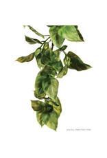 Exo Terra Jungle Plant Amapallo Large