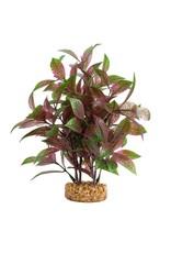 """Fluval Fluval Broad Leaf Red Ludwigia Plant, 8"""""""