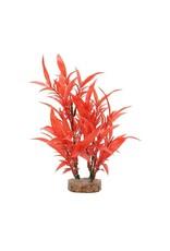 """Fluval Fluval Intense Red Hygrophila Plant, 8"""""""