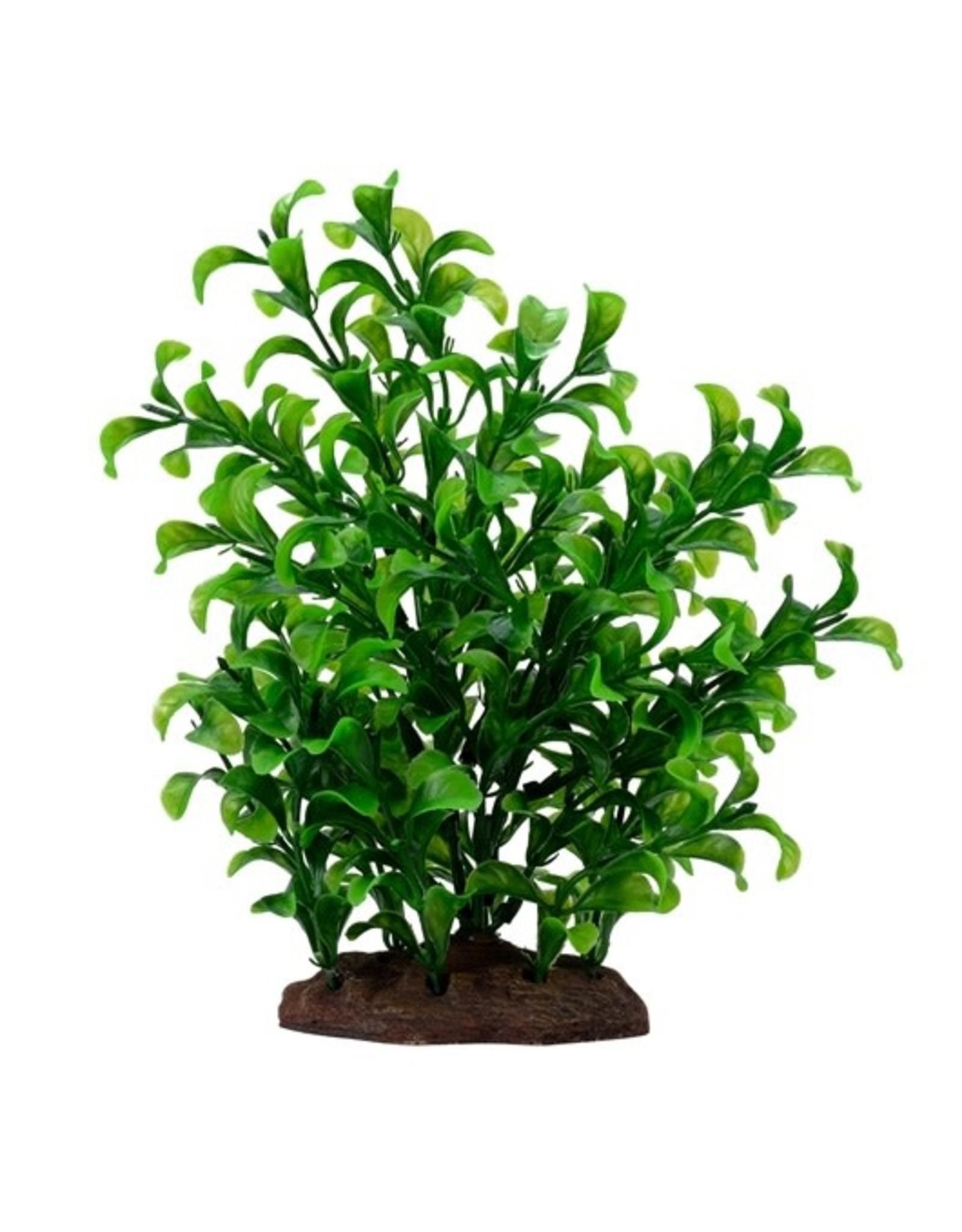 "Fluval Fluval Large Bacopa Plant, 8"""