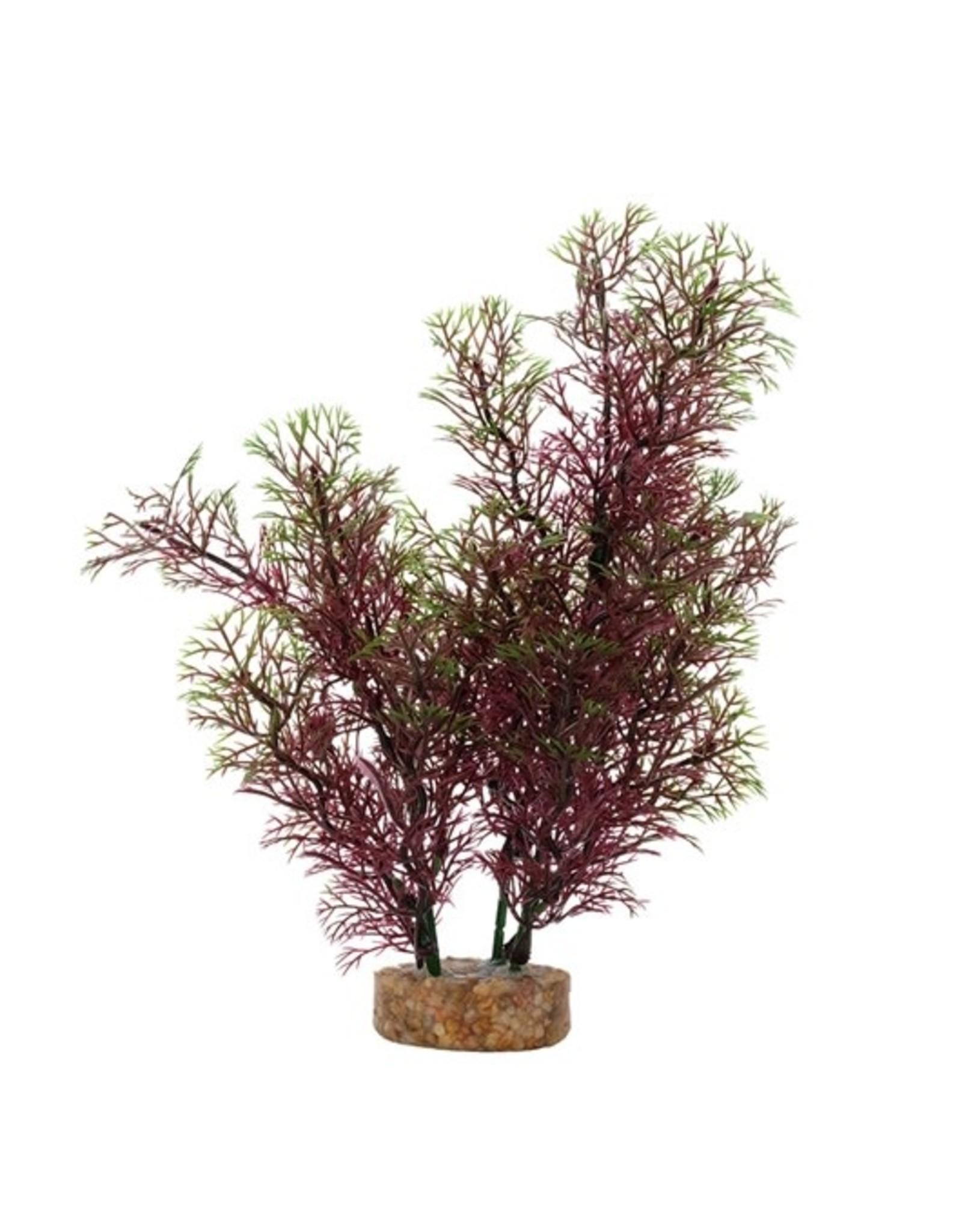 "Fluval Fluval Red Green Foxtail Plant, 8"""