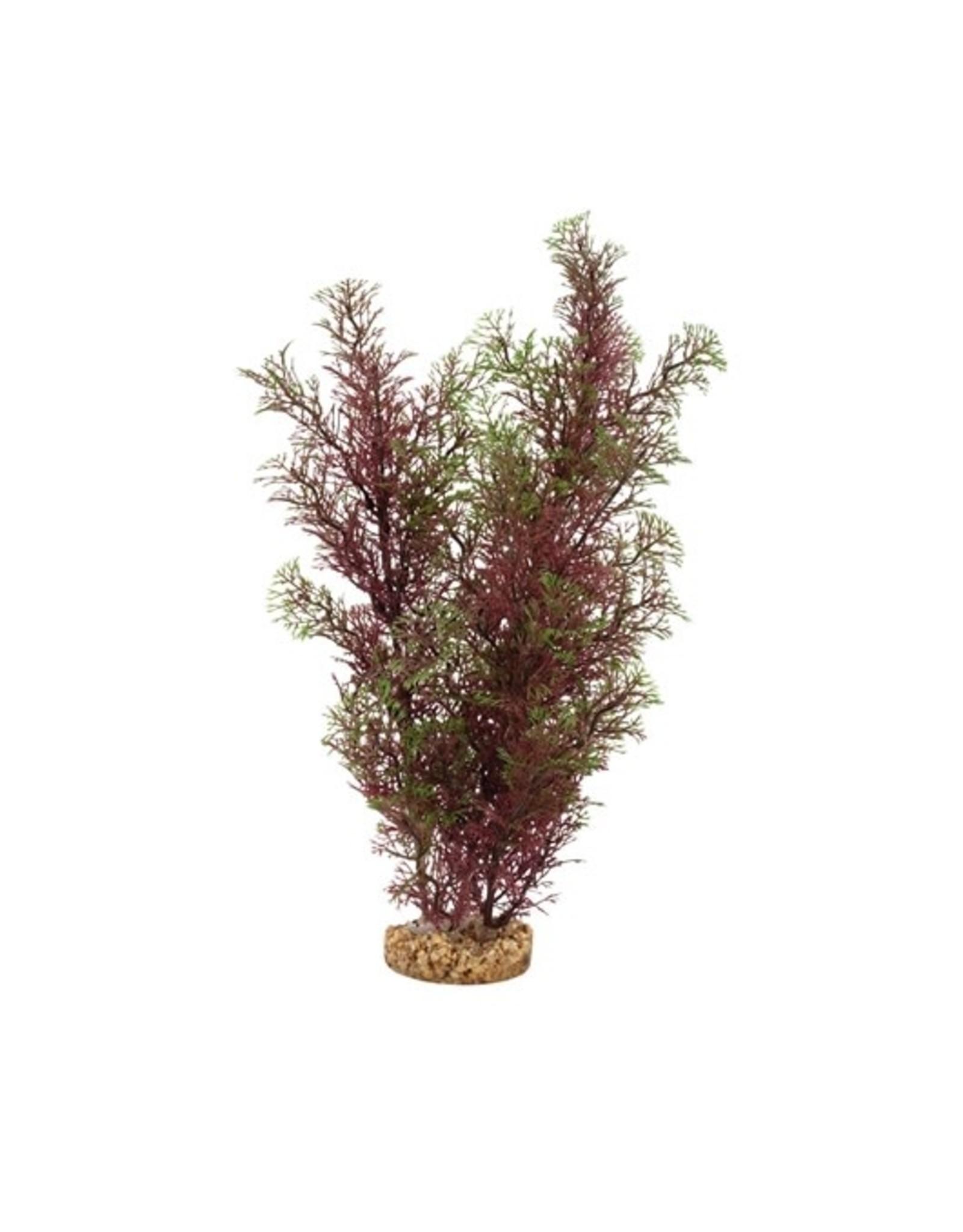 "Fluval Fluval Red/Green Foxtail Plant, 14"""