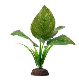 """Fluval Fluval Varigated Lizard's Tail Plant, 6"""""""