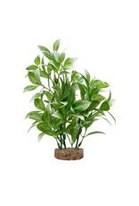 """Fluval Fluval White-Tipped Ludwigia Plant, 8"""""""