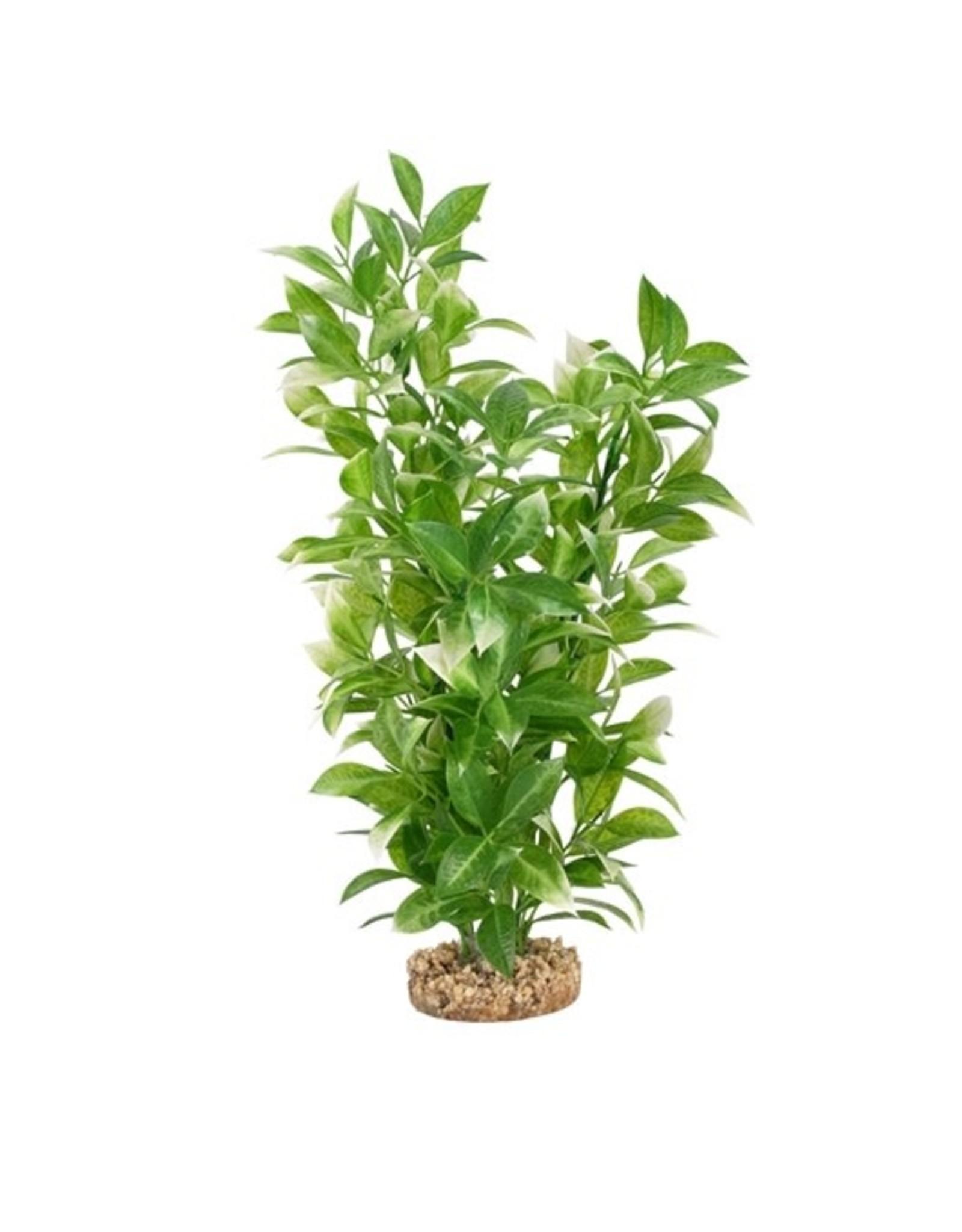 """Fluval Fluval White-Tipped Ludwigia Plant, 14"""""""