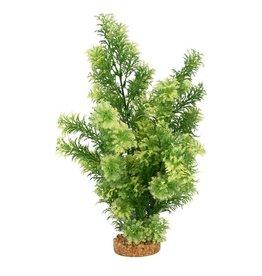 "Fluval Fluval White-Tipped Hottonia Plant, 14"""