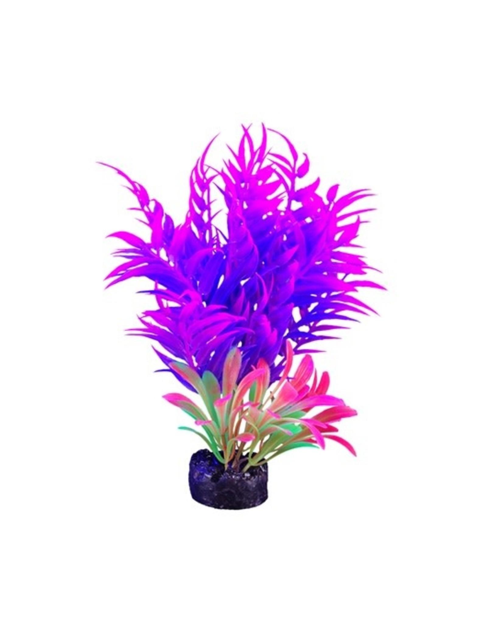 "Marina iGlo Plant - 5.5"" - Pink/Purple"