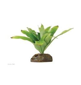 Exo Terra Vriesea Gigentea - Medium