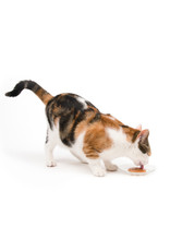 CatIt Creamy Lickable Cat Treat Salmon 5 Pack